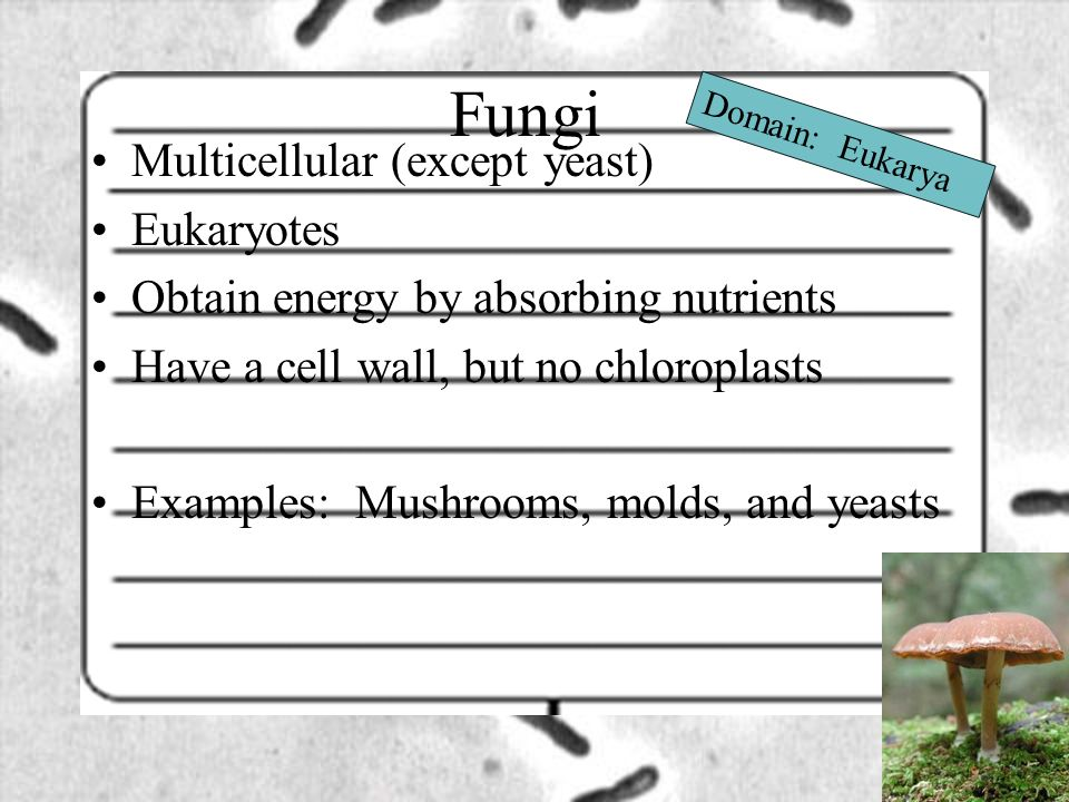 Fungi Multicellular (except yeast) Eukaryotes