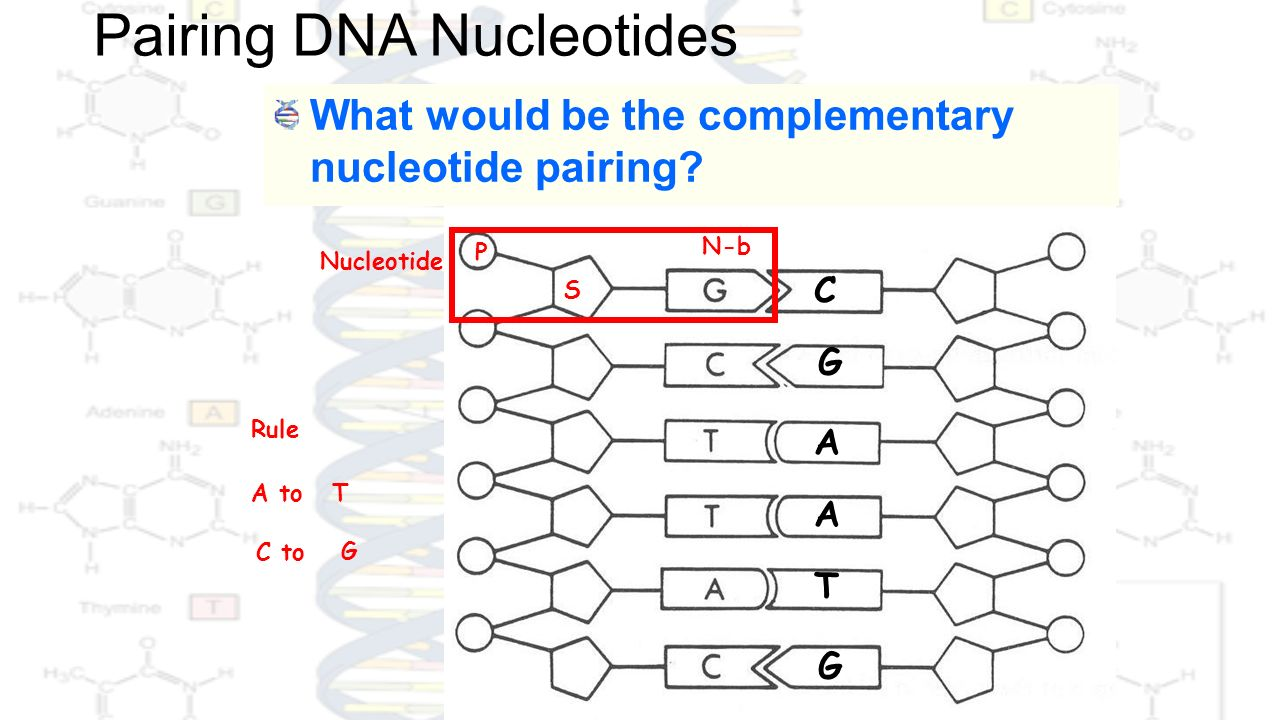 how to tell apart the nitrogen bases