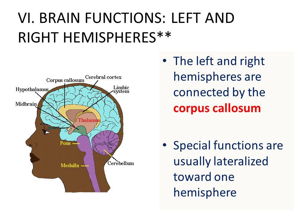 Corpus Callosum Function Webmd - Information