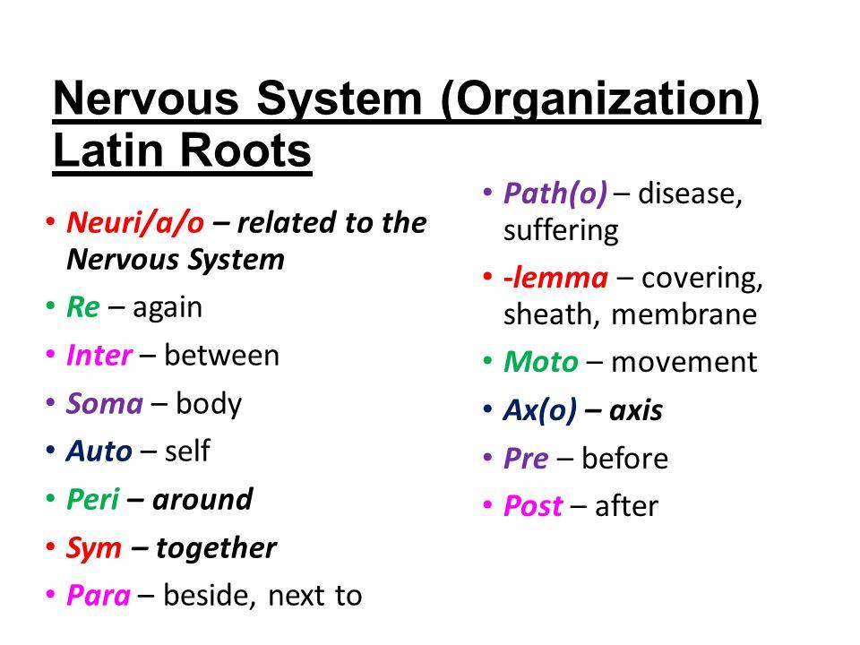 Fancy Anatomy Latin Roots Ornament - Anatomy Ideas - yunoki.info