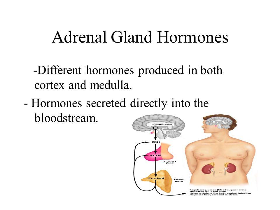 The Adrenal Gland Stress Regulation Ppt Video Online Download