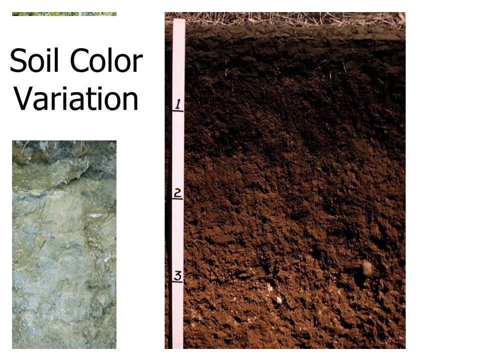 Dirt is simply misplaced soil ppt video online download for Soil yellow color
