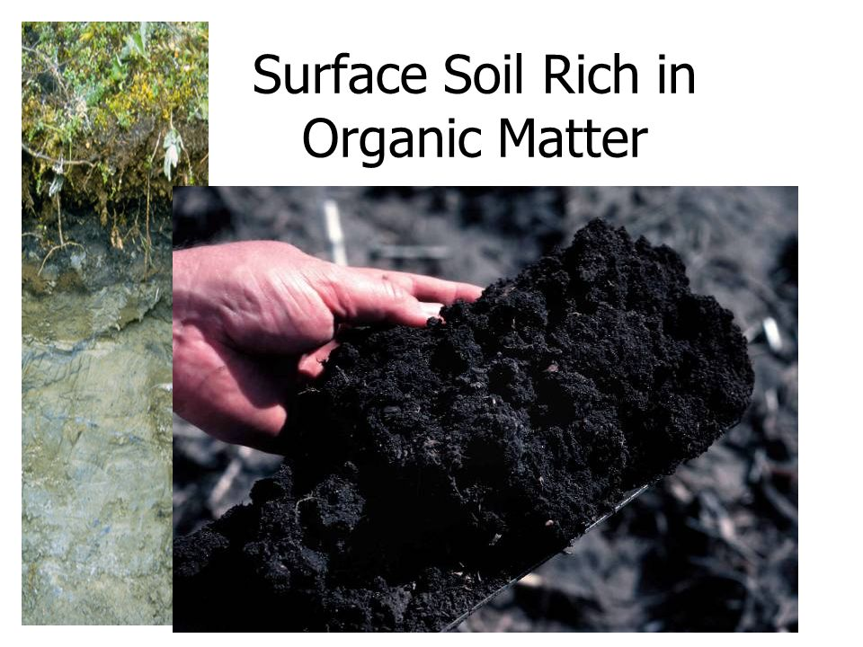 Dirt is simply misplaced soil ppt video online download for Soil organic matter
