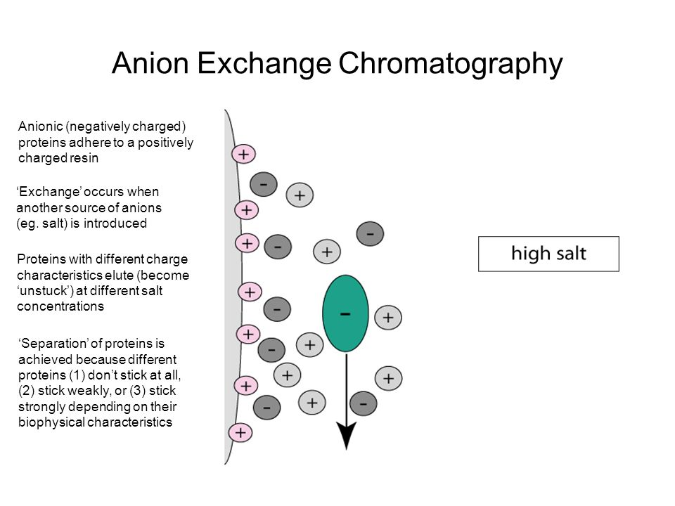 lab 3 ion exchange chromatography Ion exchange chromatography in ion exchange chromatography, the stationary phase contains ionic groups, for example, sulfonic or tetraalkylammonium, and the mobile phase is an aqueous buffer the component molecule is retained by the stationary phase by coulombic attraction.