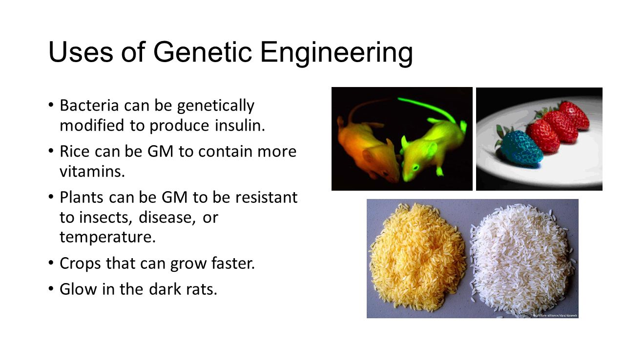 an analysis of genetic engineering Discover the many important advantages and disadvantages of genetic engineering.