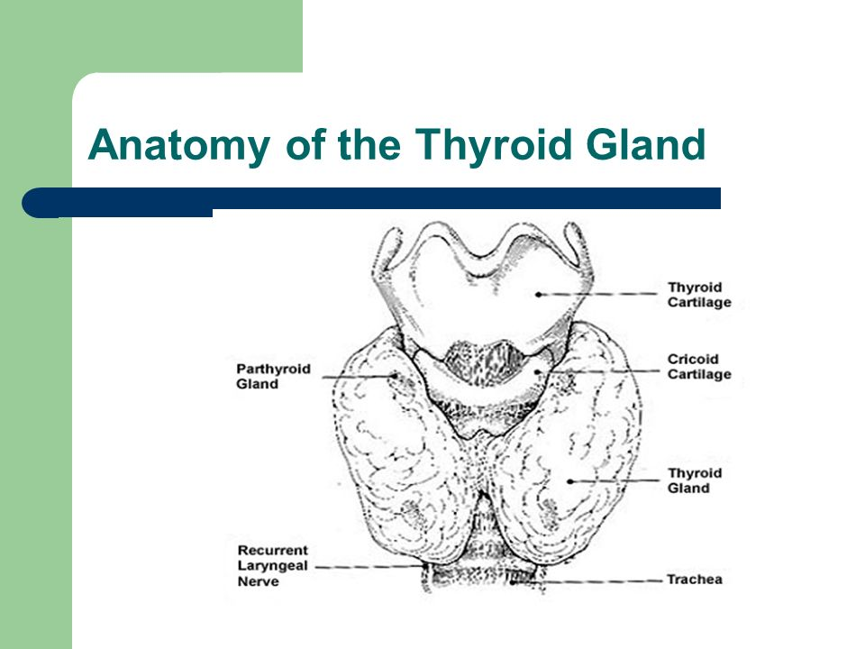 thyroid history and examination pdf