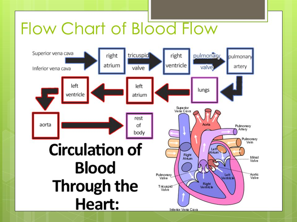 Flow Chart Of Blood Rebellions
