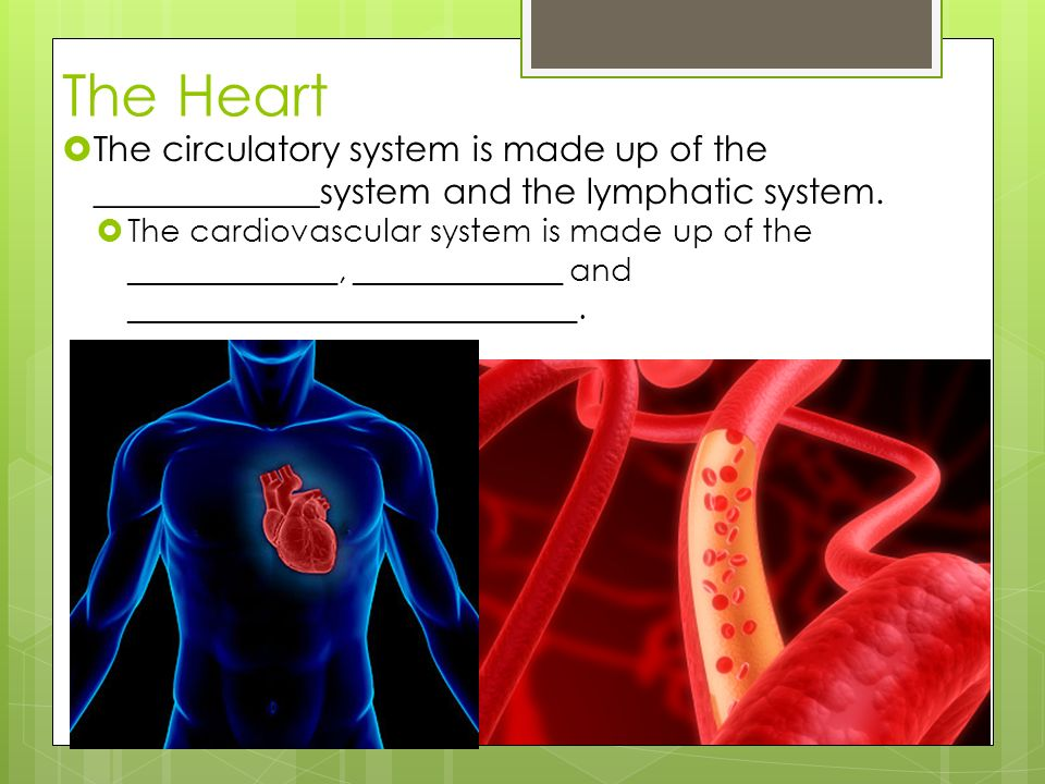 cardiovascular system worksheet Find and save ideas about circulatory system on pinterest | see more ideas about circulatory system for kids, heart circulation and heart pumping blood.