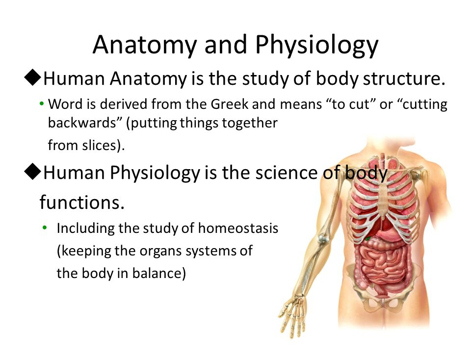 Lujoso Why Do We Study Anatomy And Physiology Together Imagen ...