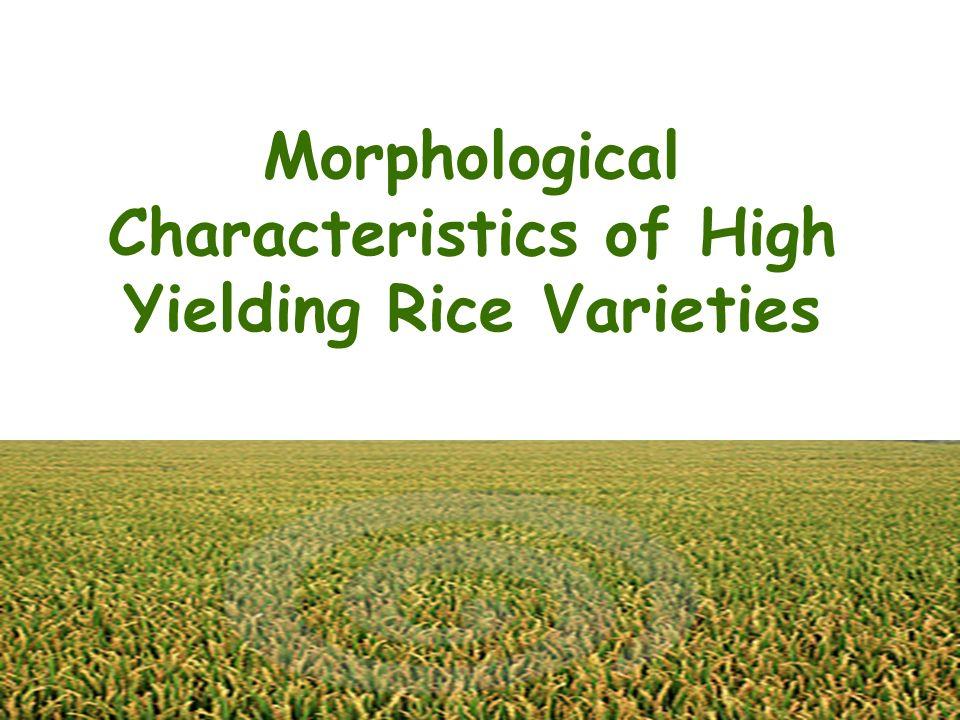 Morphological Characteristics of High Yielding Rice Varieties