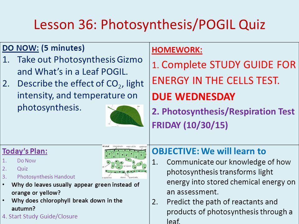 photosynthesis respiration quiz