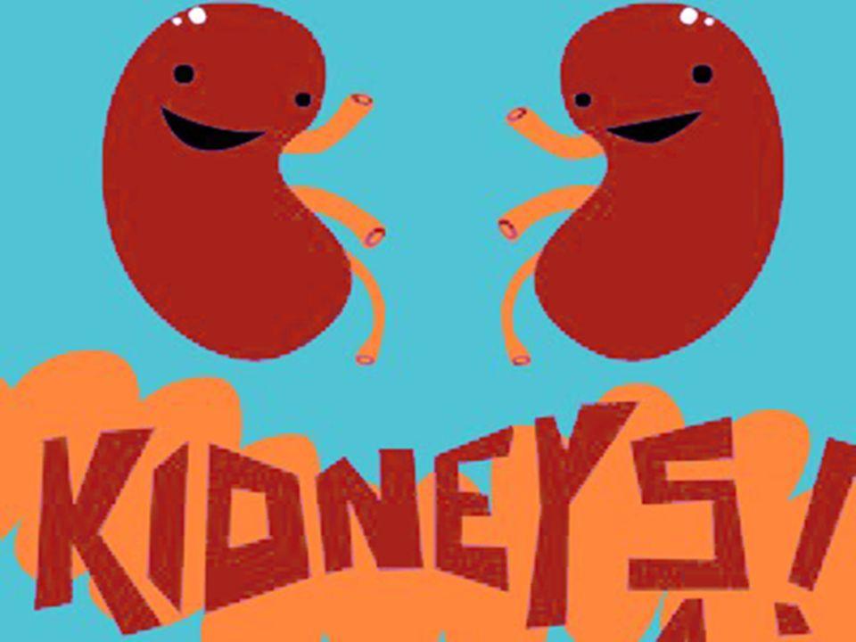 Kidney Regulation Ppt Video Online Download