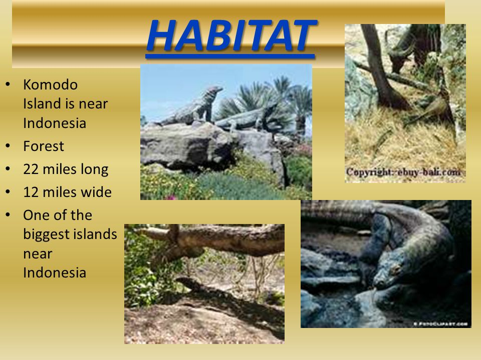 HABITAT Komodo Island is near Indonesia Forest 22 miles long