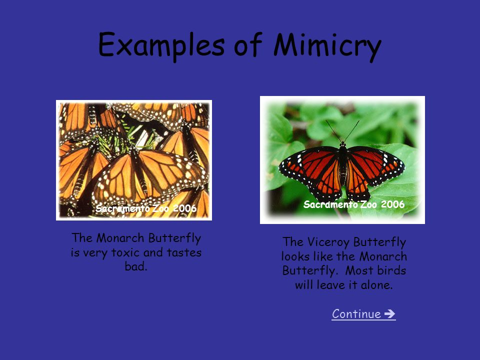 animal adaptations camouflage cover page continue ppt