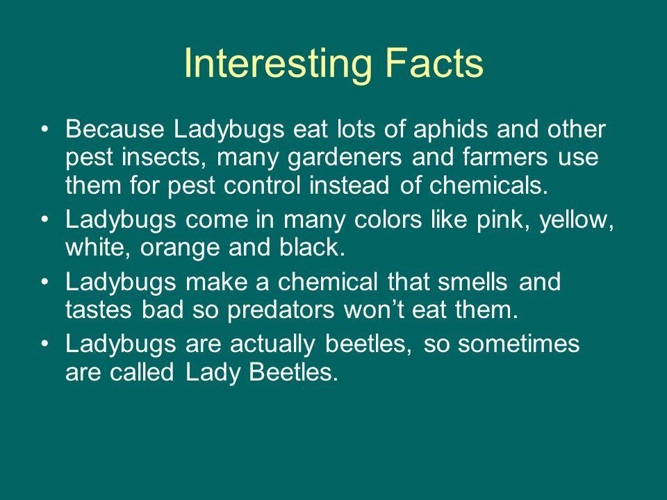 Ladybugs By: Macie Nguyen Hi. My name is Macie. - ppt download