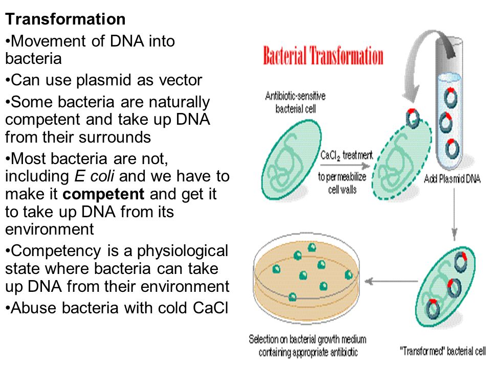 Bacterial plasmids ppt