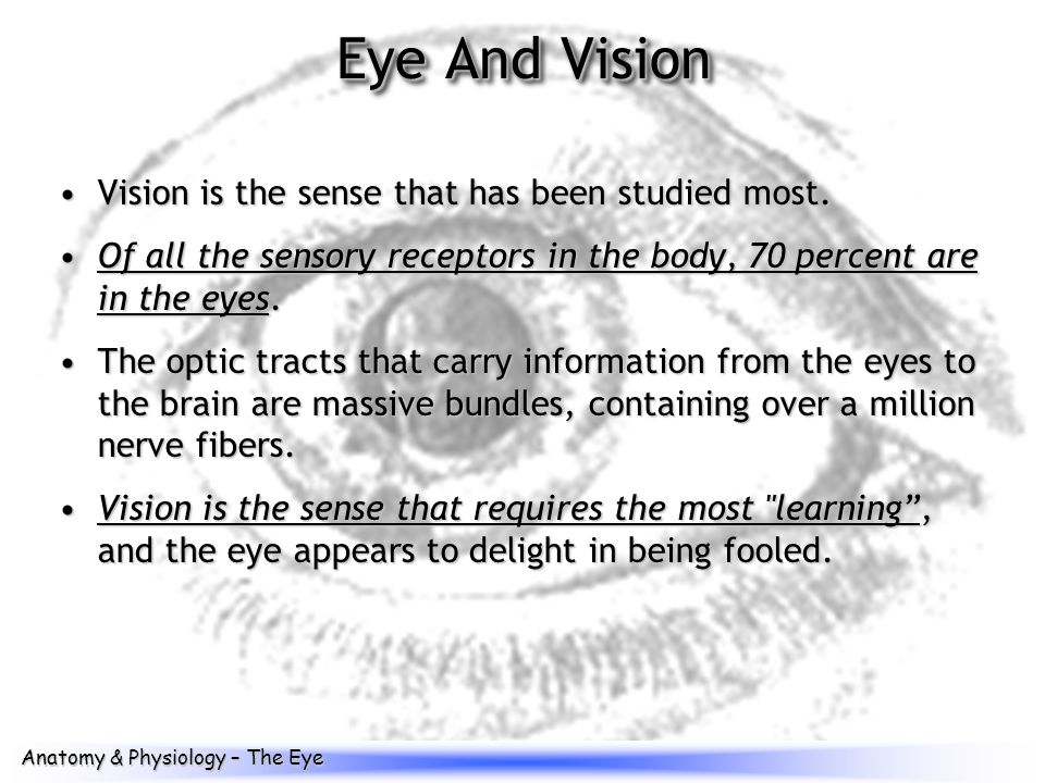 Groß Anatomy And Physiology Of The Eye Video Ideen - Menschliche ...