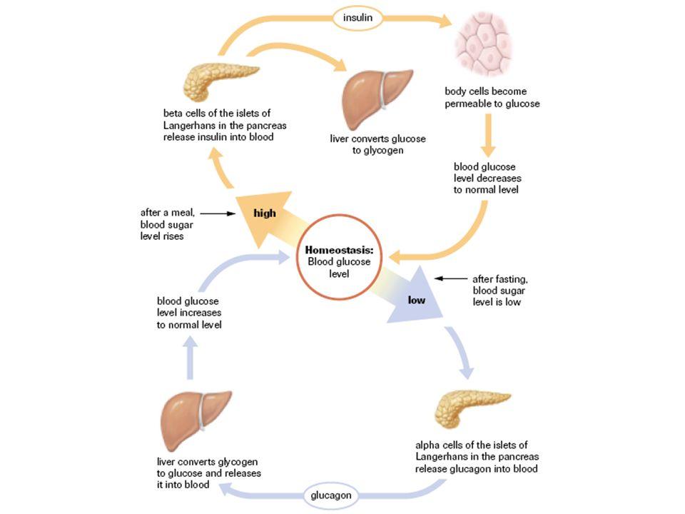 explain hormonal regulation of blood glucose level Explain how hormone production is regulated insulin causes blood glucose levels 184 regulation of hormone production by charles molnar and jane gair is.