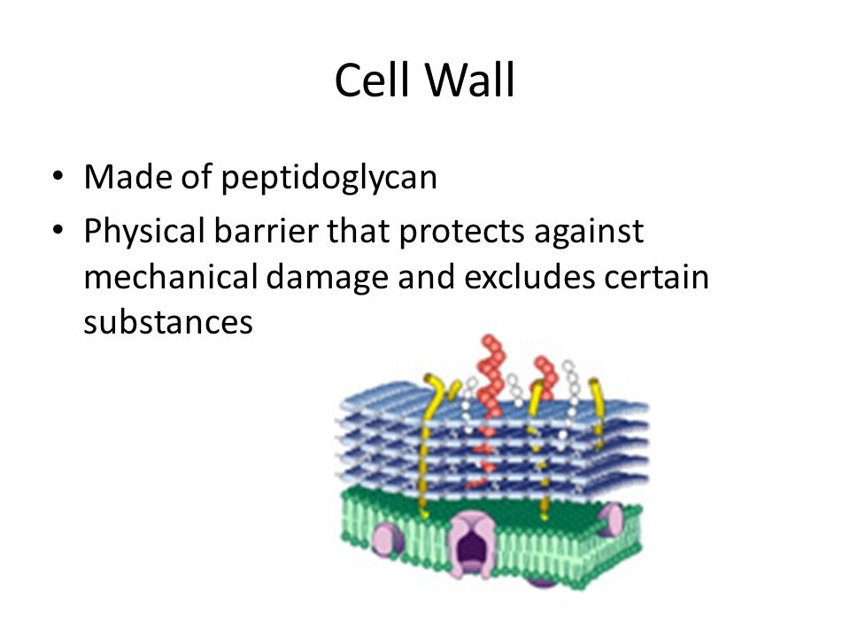 how to phospholipids help enrey and exit of substances