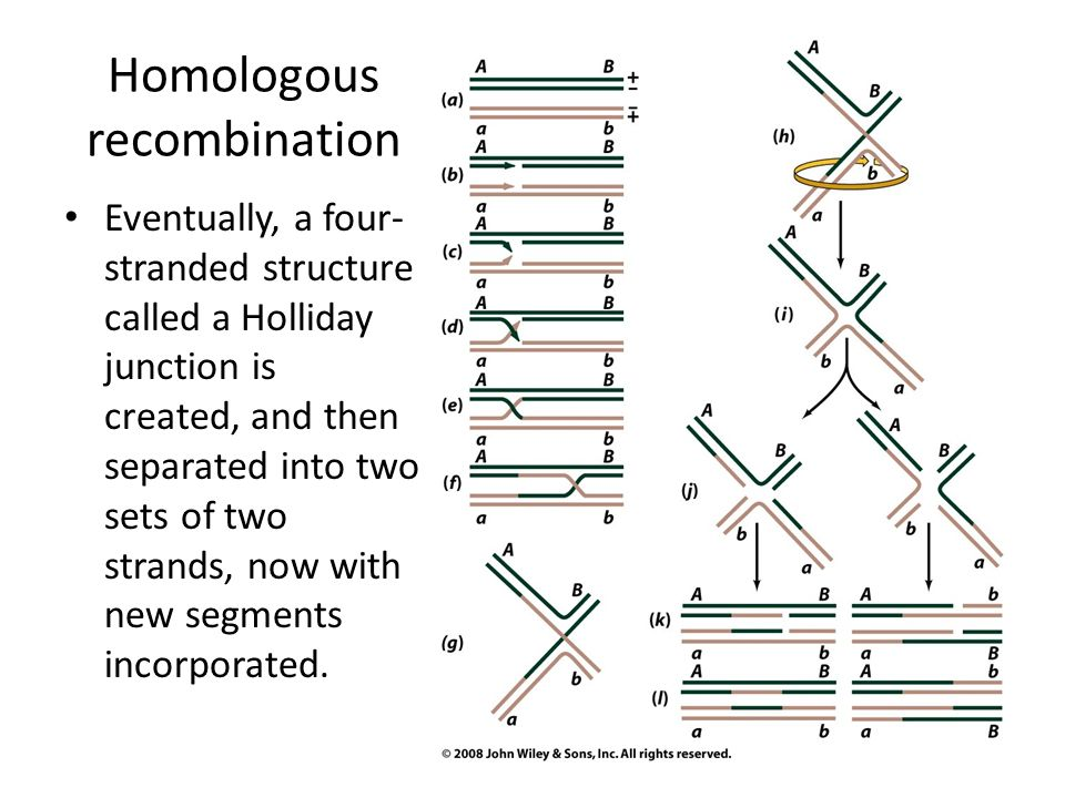 how to know if a gene is homologous