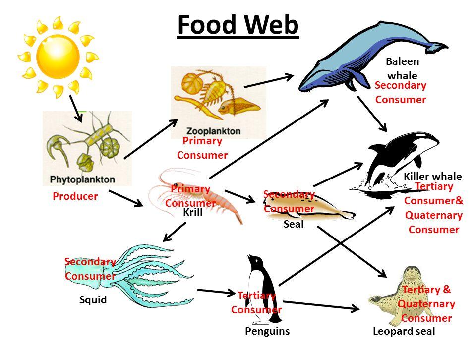 Quaternary Consumer Animals   www.imgkid.com - The Image ... Quaternary Consumer Examples