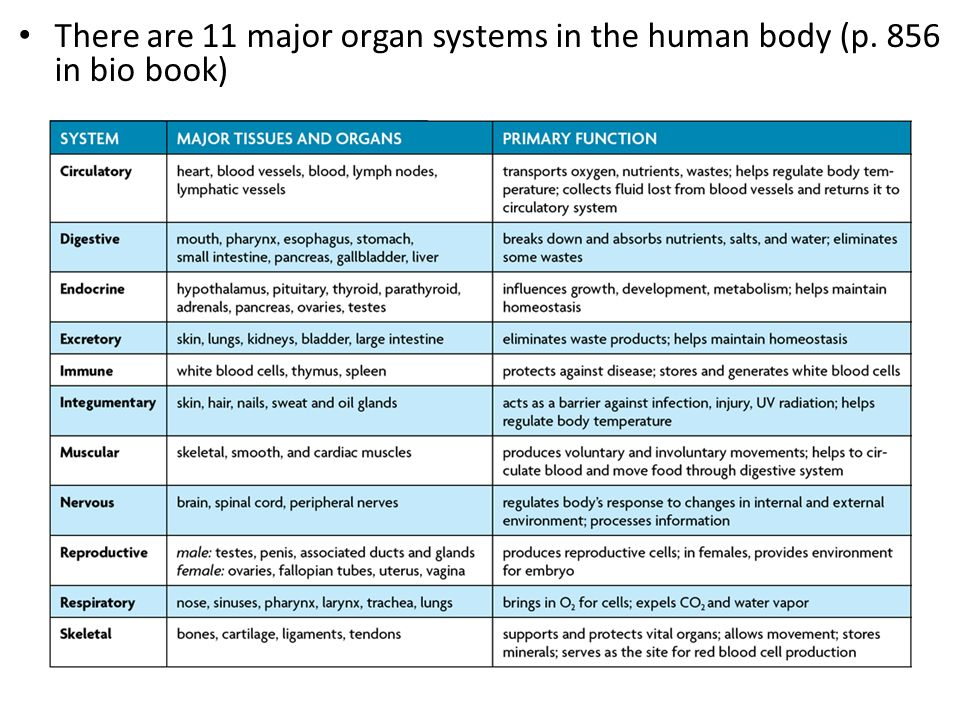 11 body systems and their diseases pdf