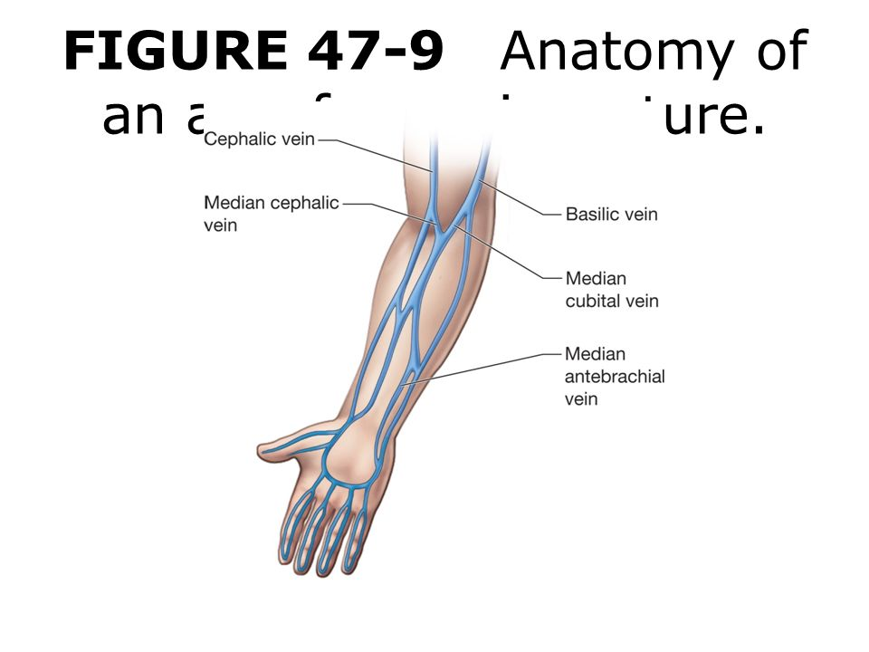 Anatomy of arm veins for venipuncture 993142 - follow4more.info