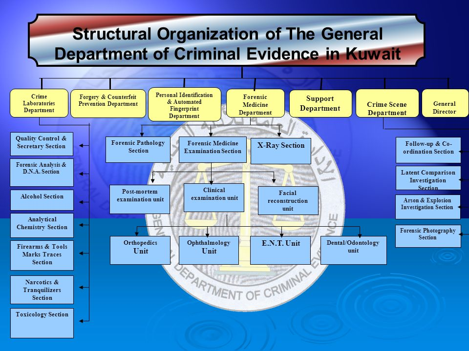an analysis of the mafia organisation The mafia: an analysis of an organized group the other name for mafia is cosa nostra which is known as a sicilian organized group of criminals that first developed in.