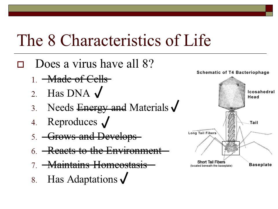microorganisms viruses bacteria ppt video online download