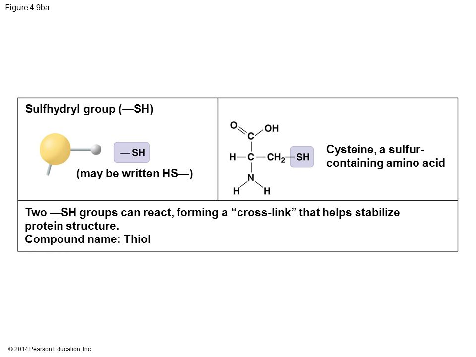 Sulfhydryl Group Examples Carbon and the ...