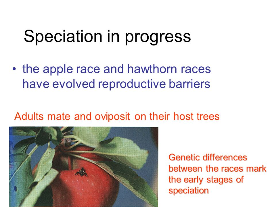 Natural Selection And Sympatric Divergence In The Apple Maggot