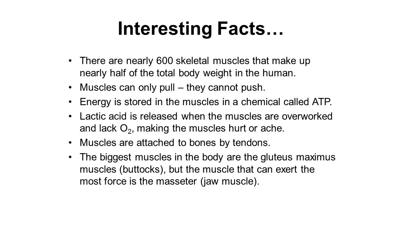 human body systems. - ppt download, Muscles