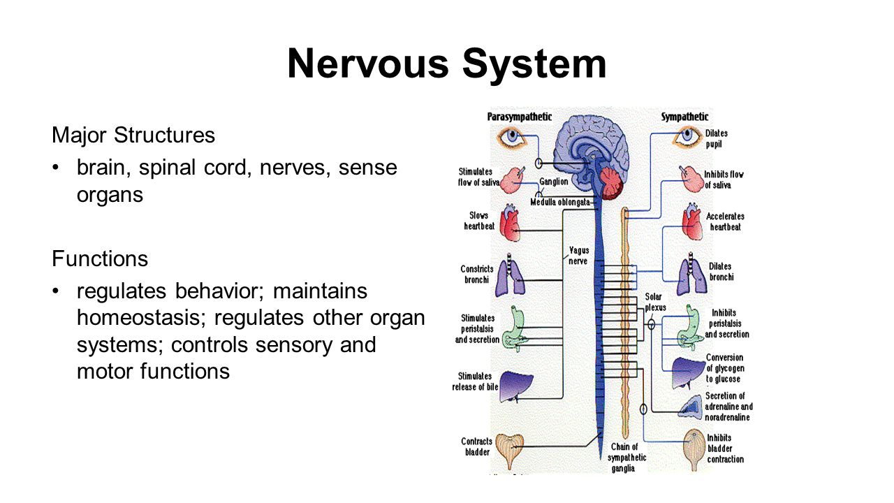 sensory organs of human body Five senses  sense organs: skin, nose, tongue unlike the other sense organs  students practice vocabulary relevant to the human body by reading the.