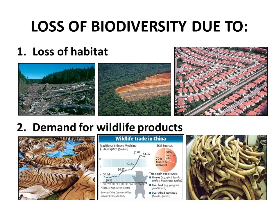 the loss of biodiversity The main cause of the loss of biodiversity can be attributed to the influence of human beings on the world's ecosystem, in fact human beings have deeply altered the.