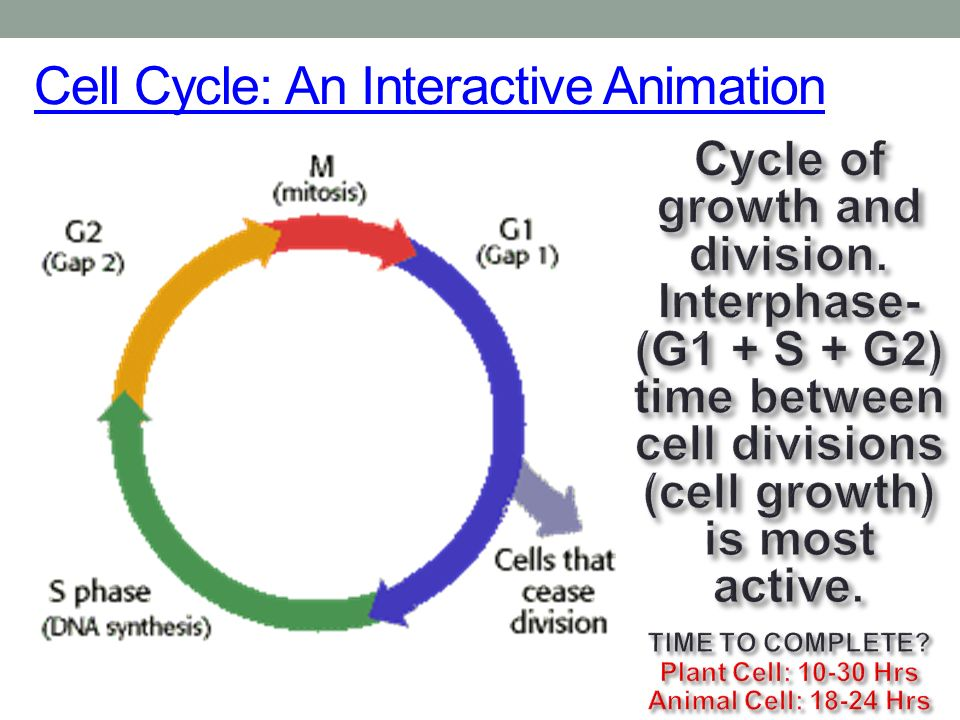 highly active dna cells essay An introduction to molecular biology/replication of dna in a cell, dna replication begins (double stranded dna) in the active site has a wider and shallower.