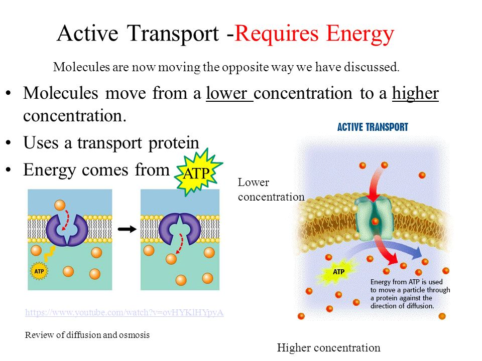 active transport Is an external source of energy always needed to drive active transport in some cases it is possible to couple the transport of two different molecules across a membrane so that the energetic effects cancel one another out.