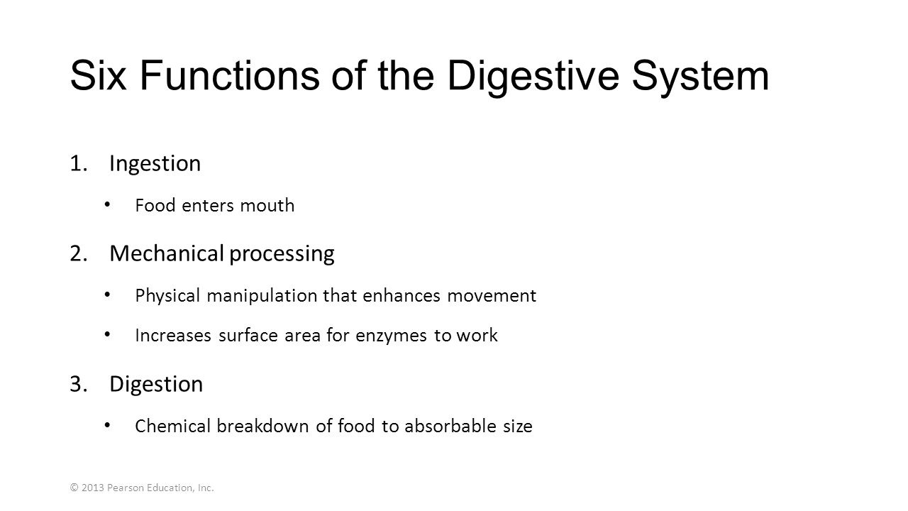Digestive system physiology ppt video online download six functions of the digestive system nvjuhfo Choice Image
