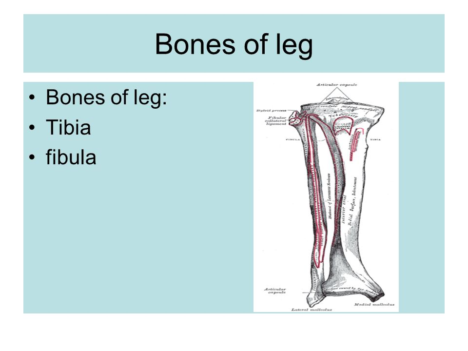 lateral compartment of leg - photo #10