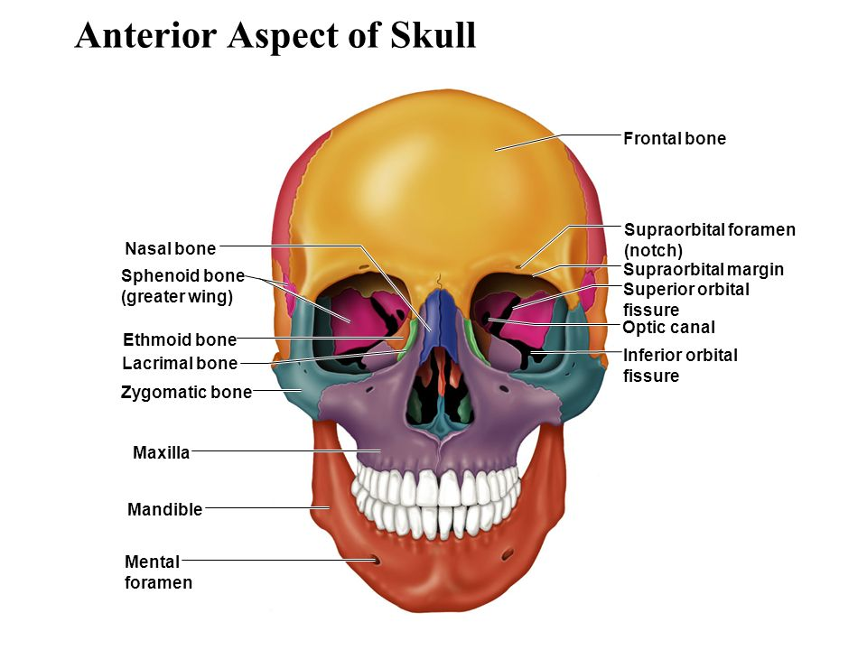 an overview of the skeleton - ppt download, Human Body