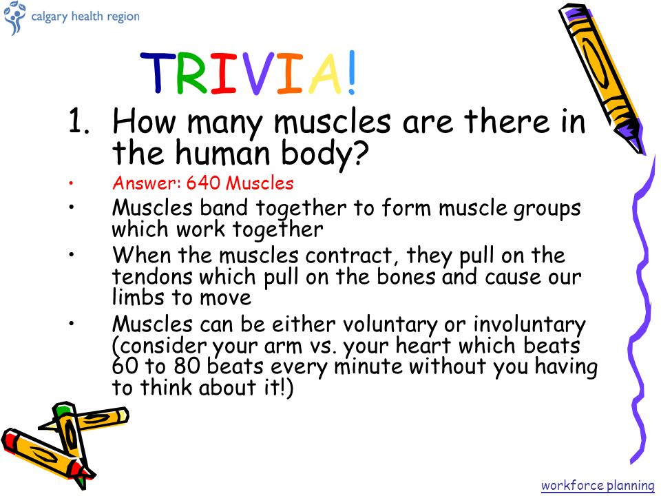 the human body trivia game workforce planning. - ppt video online, Muscles