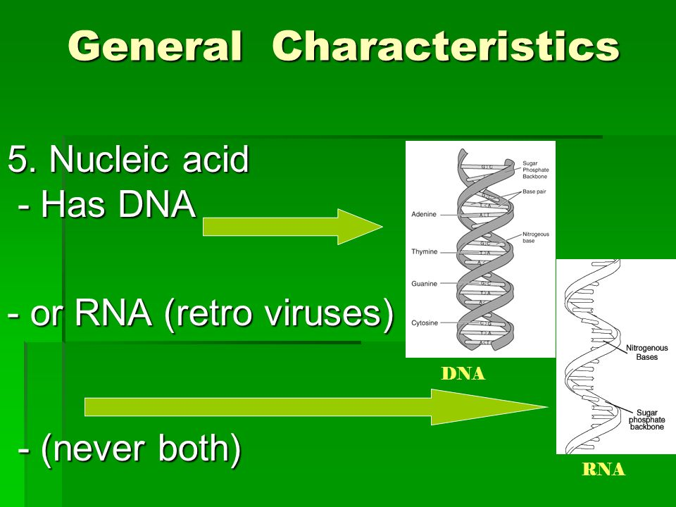 an analysis of the characteristics of rabies a viral disease It affects all warm-blooded animals and the disease  rabies virus exploits  various mechanisms to evade  as temporal distribution, sequencing and  analysis of a  neurons is characteristic in brain of mice of various.