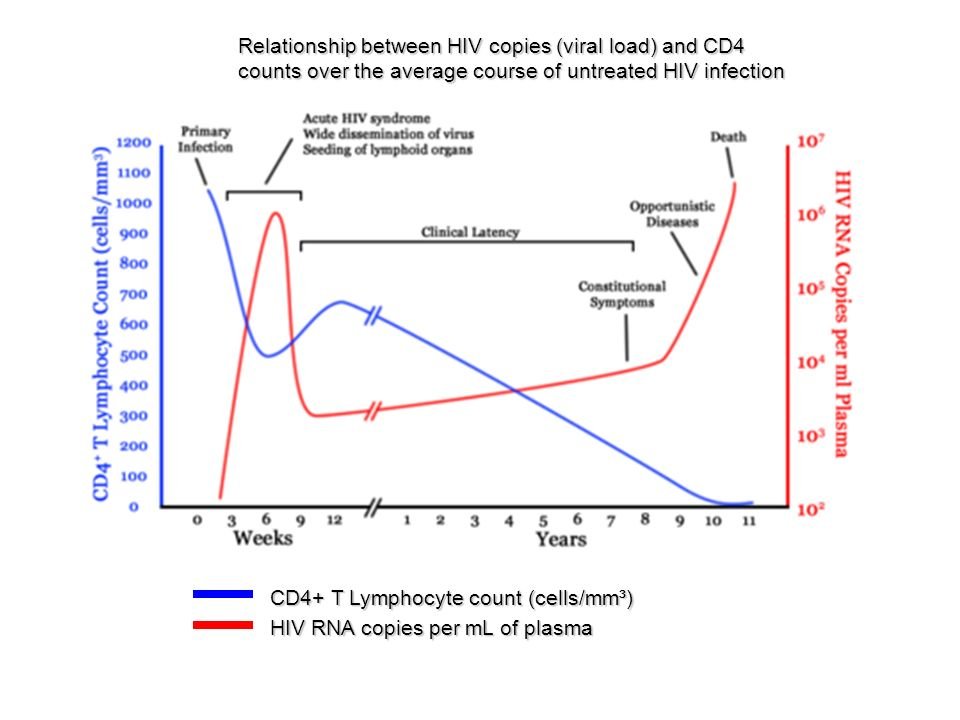 cd4 and viral load relationship quiz