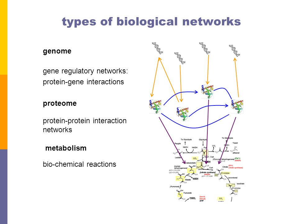 types of gene interaction pdf