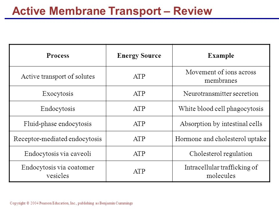 membrane transport and glycolysis review Glucose transport and the glucose signaling network have been widely studied in   regulation by glycolysis on rag1 expression that is analyzed in this study.