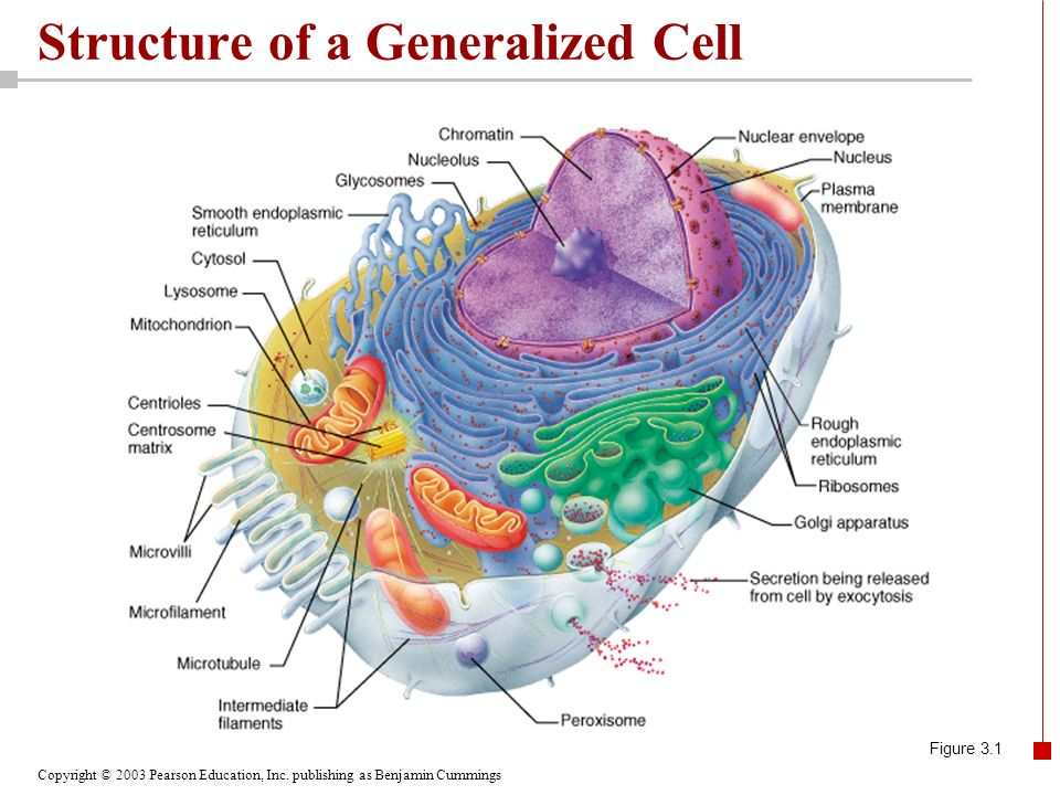chapter 3the cell ppt video online download