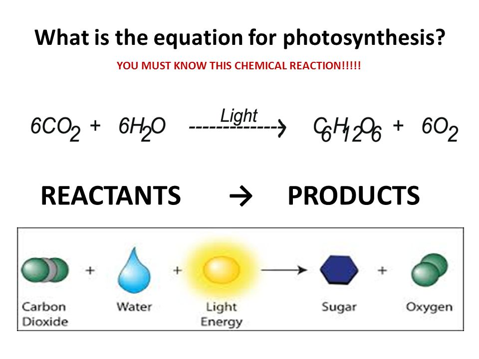 Products of photosynthesis?