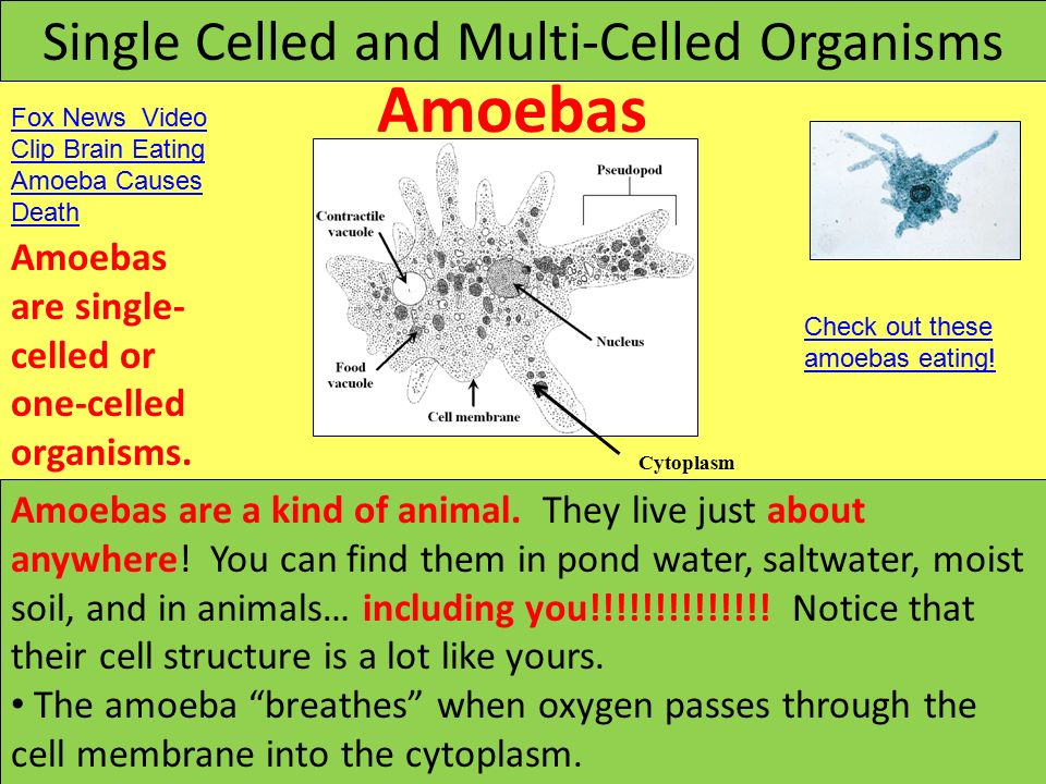 Cells And Microorganisms Ppt Video Online Download