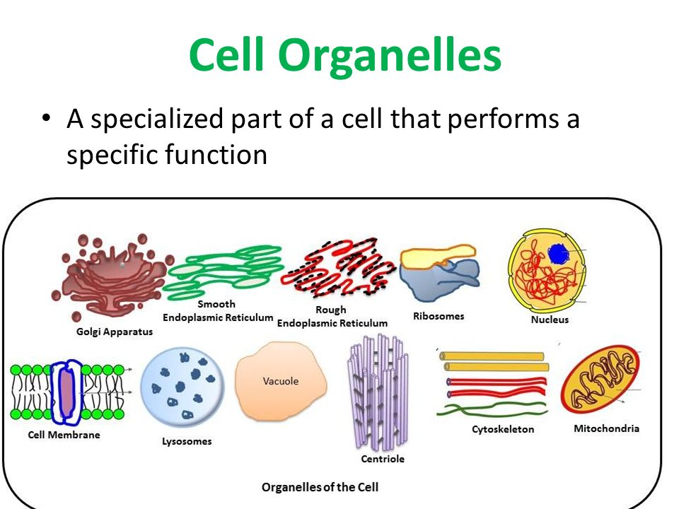 use of cell organelles and their functions pdf