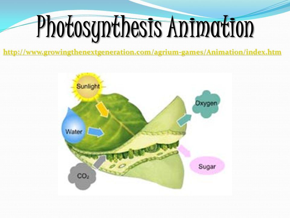 photsynthesis animation