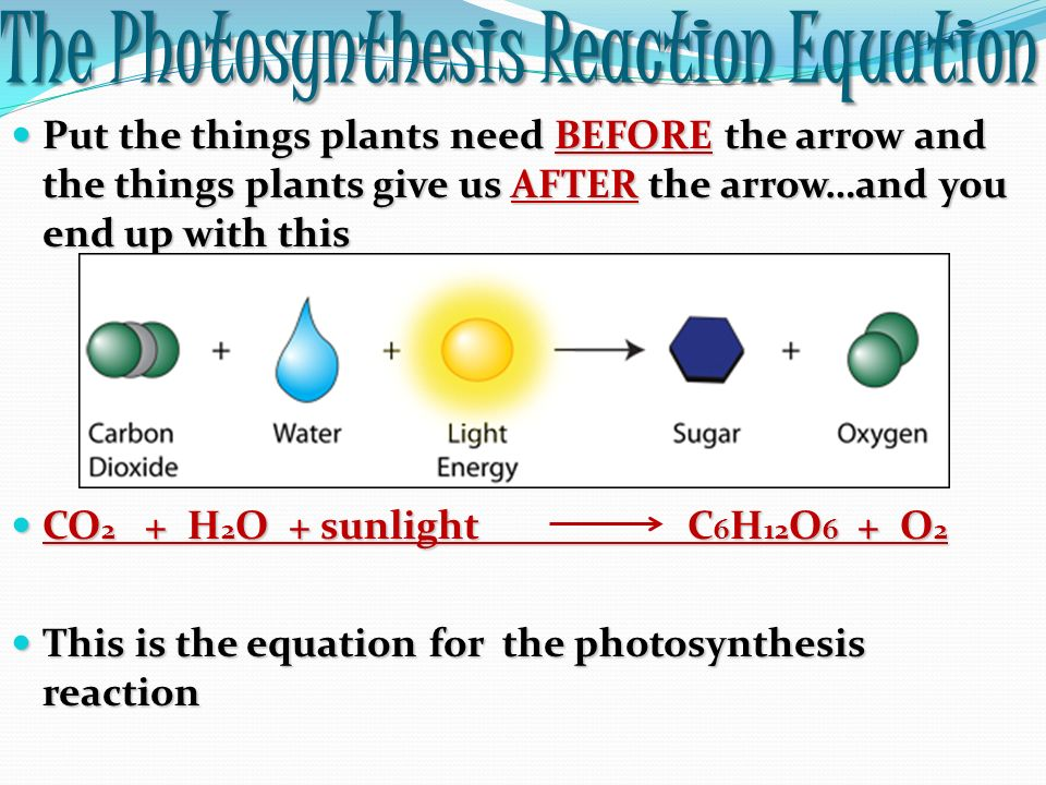 what is the equation for photosynthesis Start studying photosynthesis and cellular respiration equations learn vocabulary, terms, and more with flashcards, games, and other study tools.